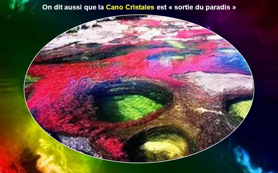 On dit aussi que la Cano Cristales est « sortie du paradis »