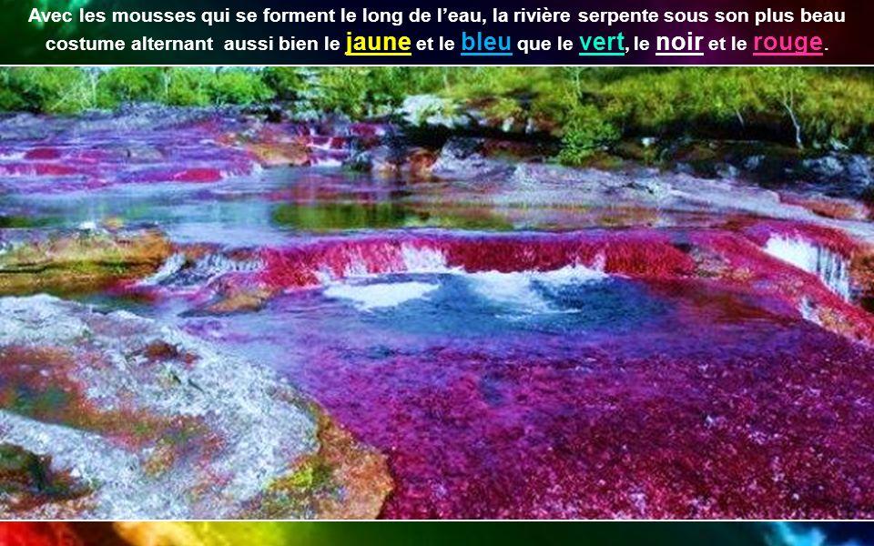 Avec les mousses qui se forment le long de l'eau, la rivière serpente sous son plus beau costume alternant aussi bien le jaune et le bleu que le vert, le noir et le rouge.