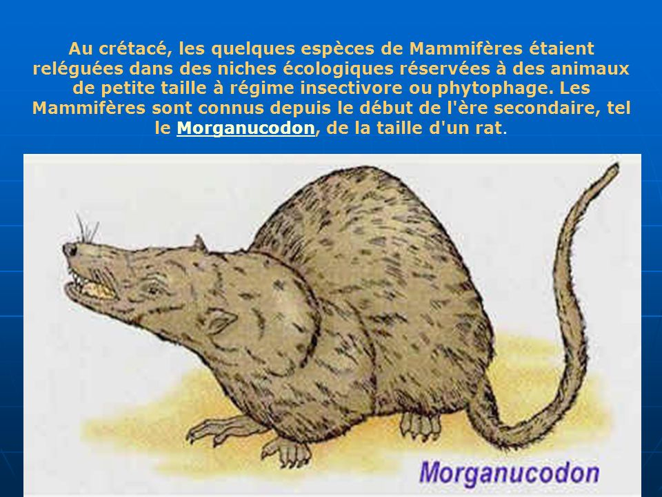 Au crétacé, les quelques espèces de Mammifères étaient reléguées dans des niches écologiques réservées à des animaux de petite taille à régime insectivore ou phytophage.