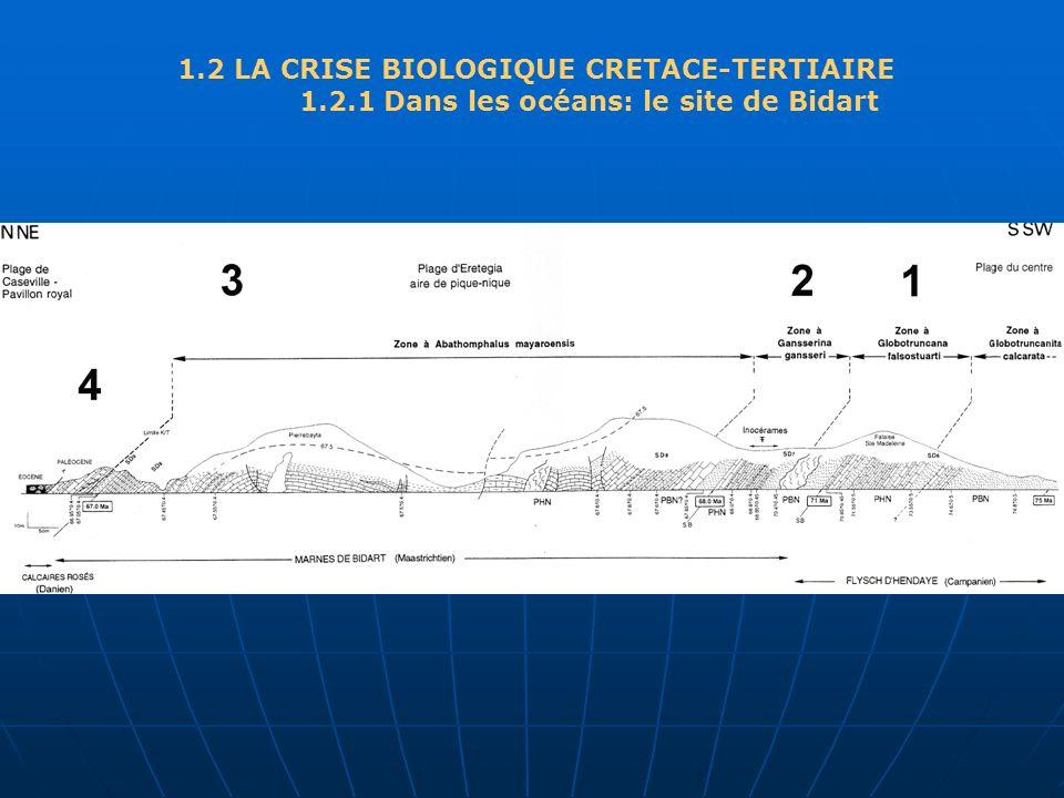 1.2 LA CRISE BIOLOGIQUE CRETACE-TERTIAIRE