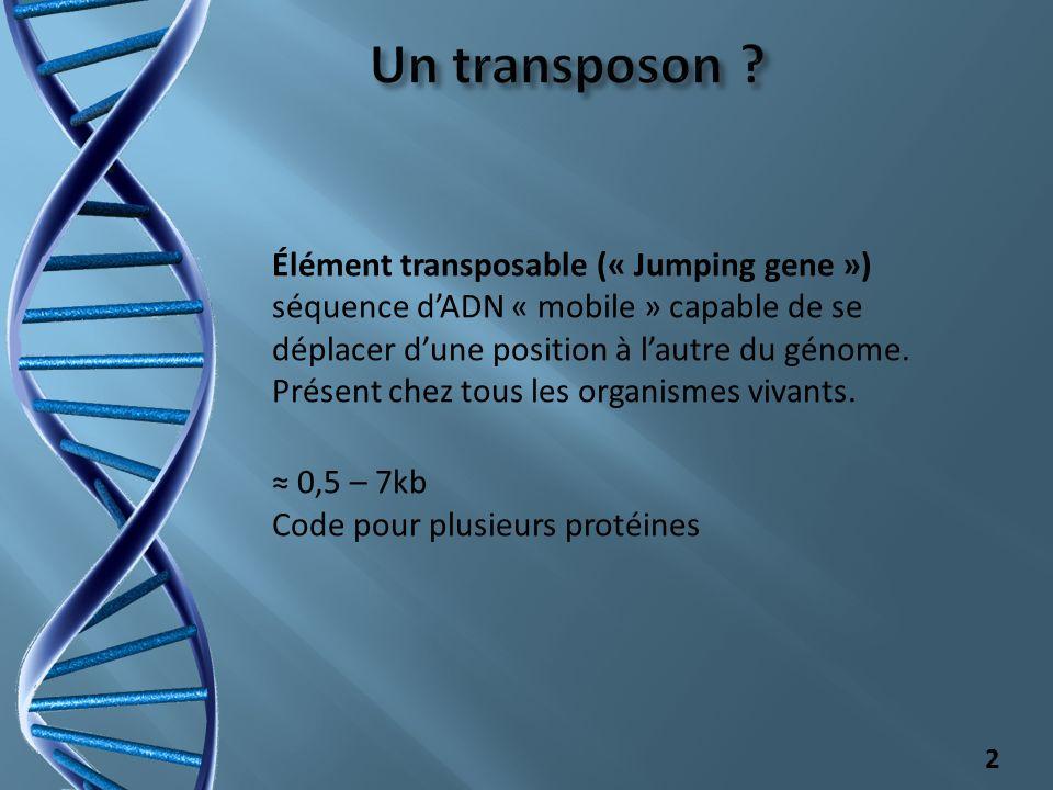 Un transposon Élément transposable (« Jumping gene ») séquence d'ADN « mobile » capable de se déplacer d'une position à l'autre du génome.