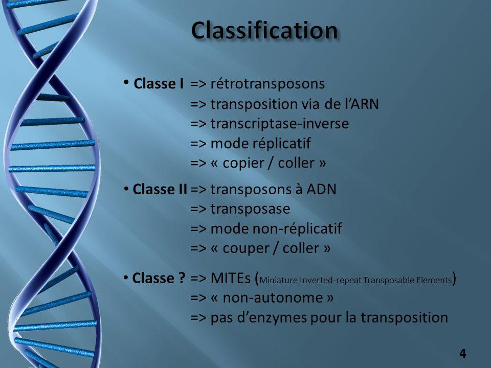Classification Classe I => rétrotransposons