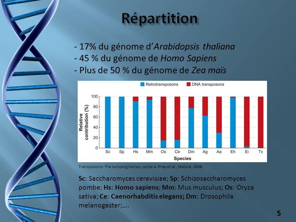 Répartition - 17% du génome d'Arabidopsis thaliana