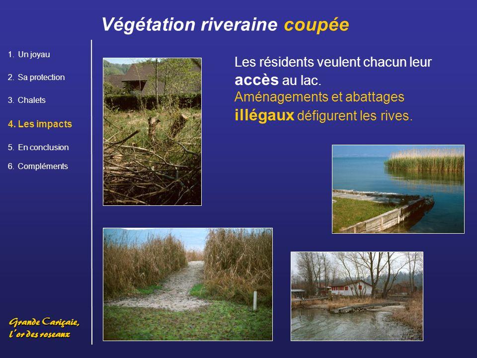 Végétation riveraine coupée