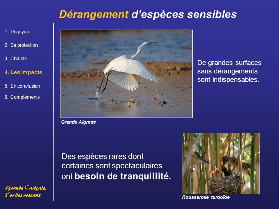 Dérangement d'espèces sensibles