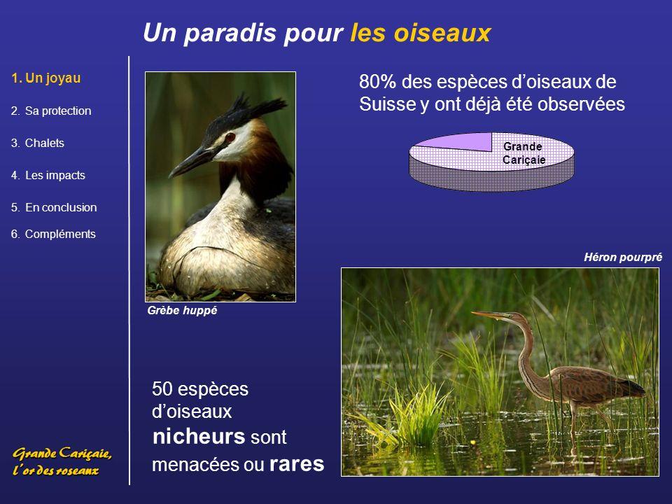 Un paradis pour les oiseaux