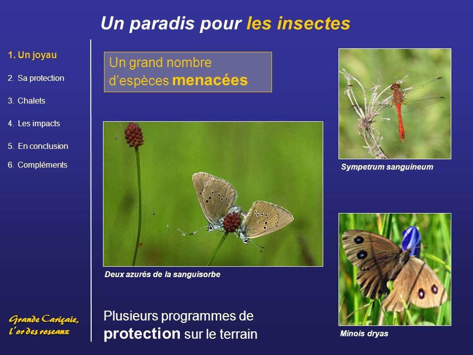 Un paradis pour les insectes