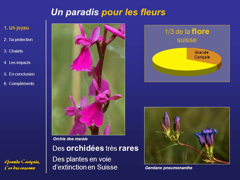 . Un paradis pour les fleurs 1/3 de la flore suisse
