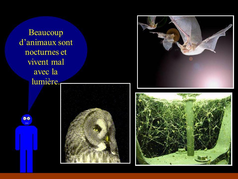 Beaucoup d'animaux sont nocturnes et vivent mal avec la lumière.