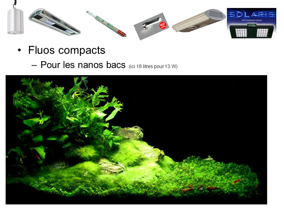 Fluos compacts Pour les nanos bacs (ici 18 litres pour 13 W)