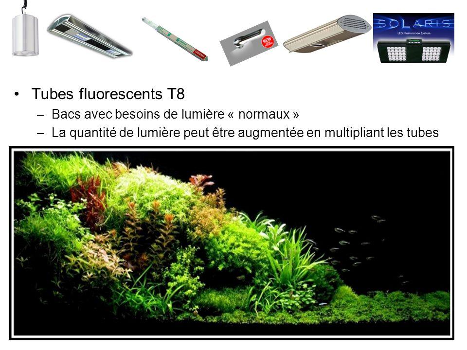 Tubes fluorescents T8 Bacs avec besoins de lumière « normaux »