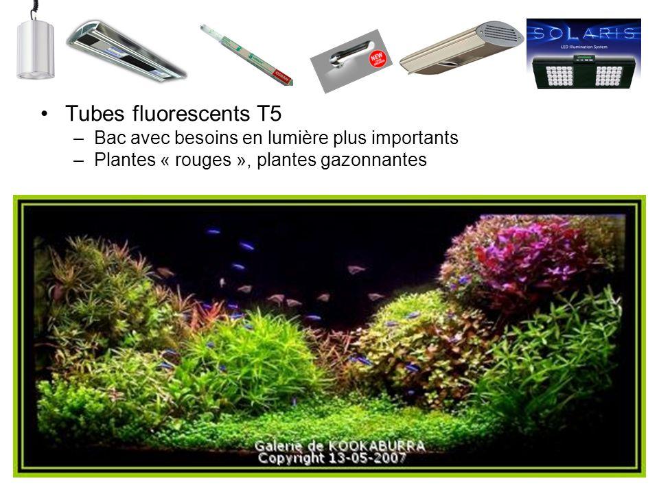 Tubes fluorescents T5 Bac avec besoins en lumière plus importants