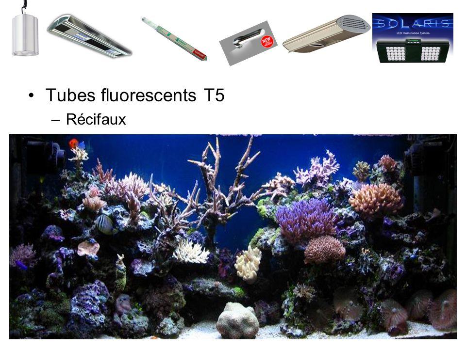 Tubes fluorescents T5 Récifaux