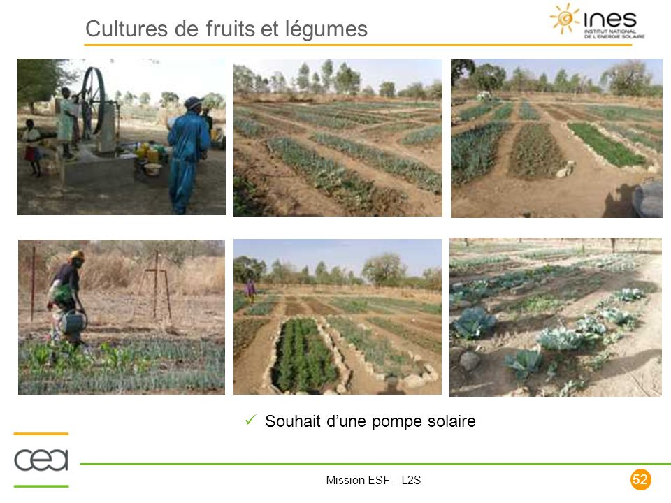 Cultures de fruits et légumes