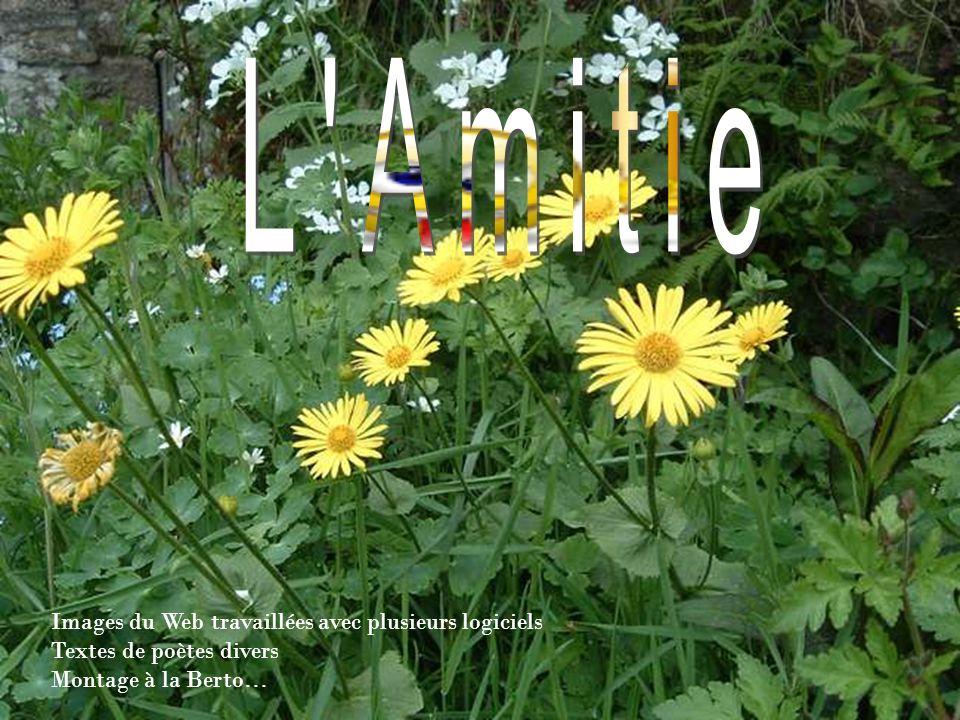 L Amitie Images du Web travaillées avec plusieurs logiciels