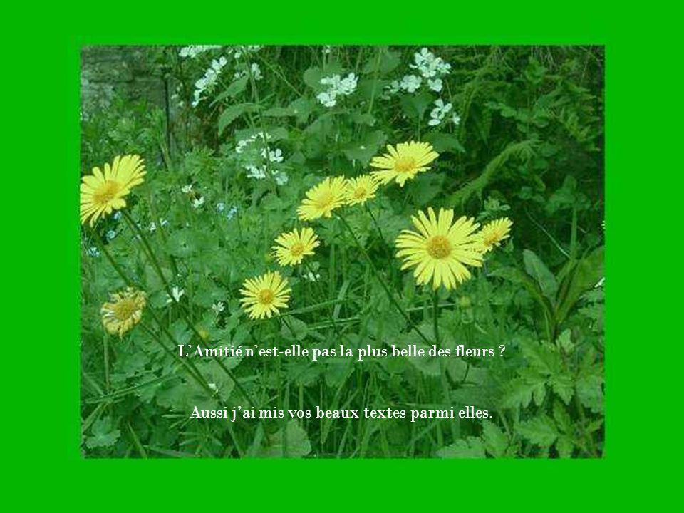 L'Amitié n'est-elle pas la plus belle des fleurs
