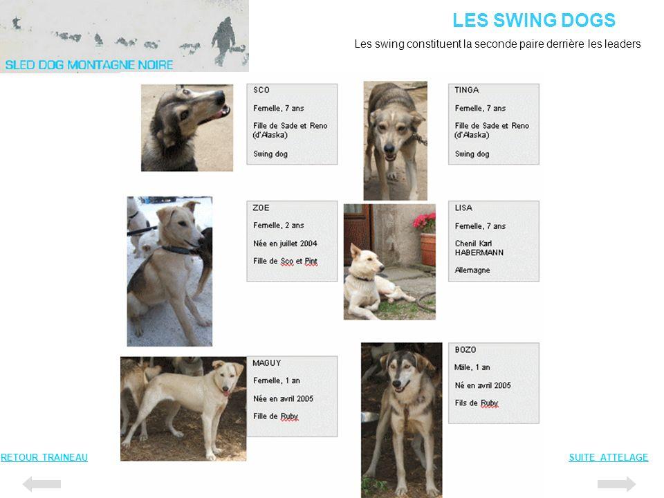 LES SWING DOGS Les swing constituent la seconde paire derrière les leaders.