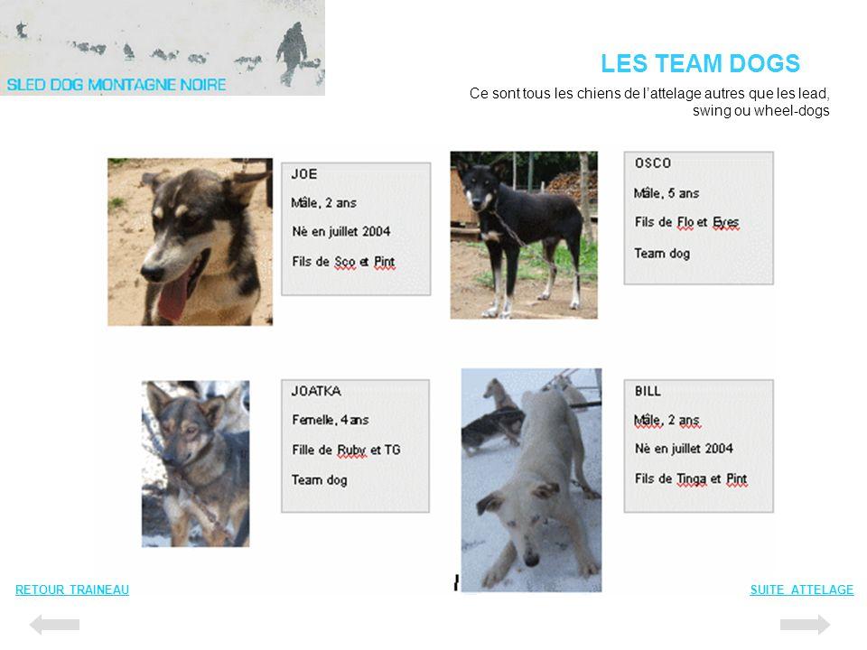 LES TEAM DOGS Ce sont tous les chiens de l'attelage autres que les lead, swing ou wheel-dogs. RETOUR TRAINEAU.