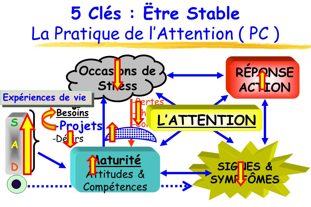 5 Clés : Ëtre Stable La Pratique de l'Attention ( PC )