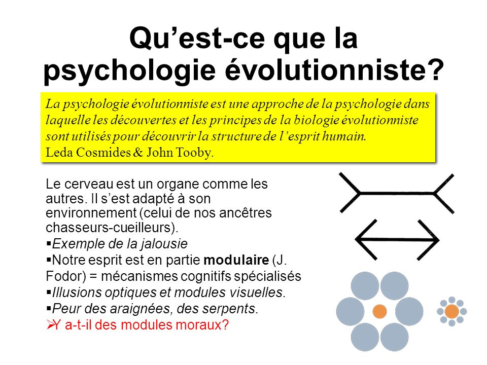Qu'est-ce que la psychologie évolutionniste
