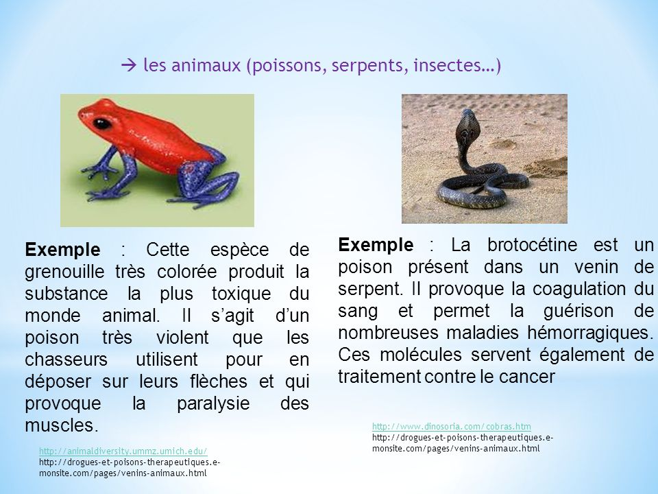  les animaux (poissons, serpents, insectes…)
