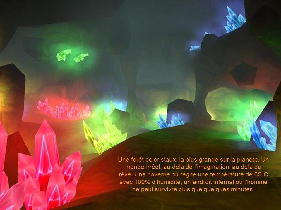 Une forêt de cristaux, la plus grande sur la planète