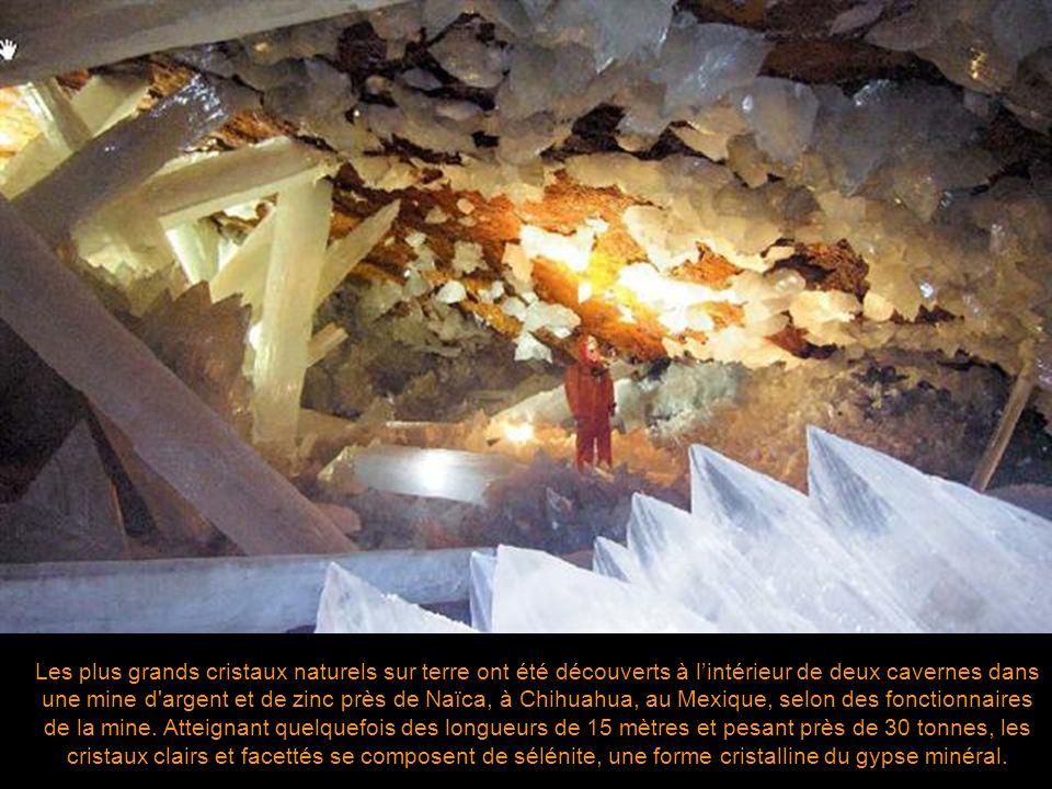 Les plus grands cristaux naturels sur terre ont été découverts à l'intérieur de deux cavernes dans une mine d argent et de zinc près de Naïca, à Chihuahua, au Mexique, selon des fonctionnaires de la mine.