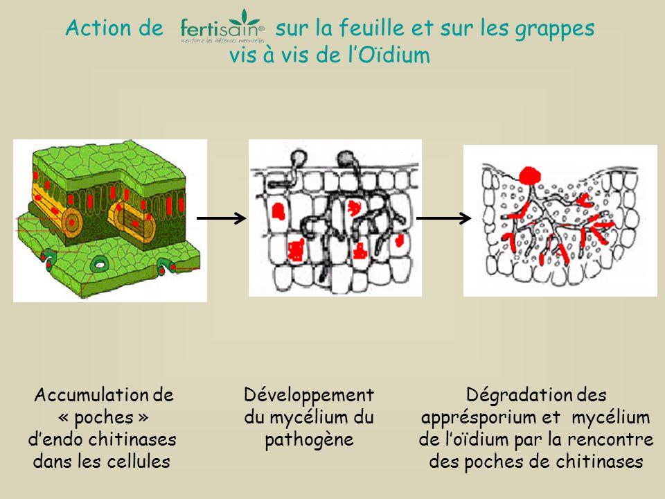 Action de sur la feuille et sur les grappes vis à vis de l'Oïdium