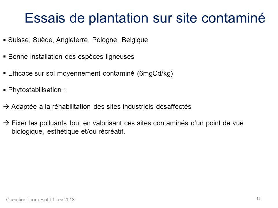 Essais de plantation sur site contaminé