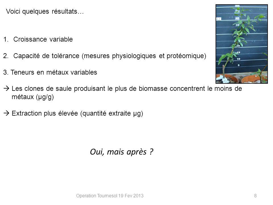 Operation Tournesol 19 Fev 2013