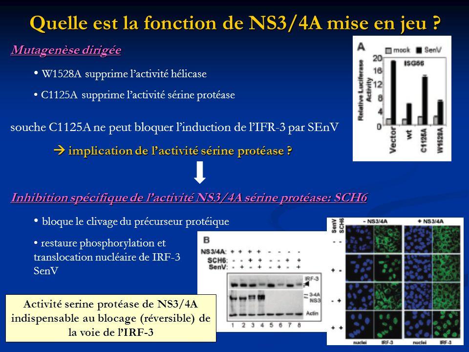 Quelle est la fonction de NS3/4A mise en jeu