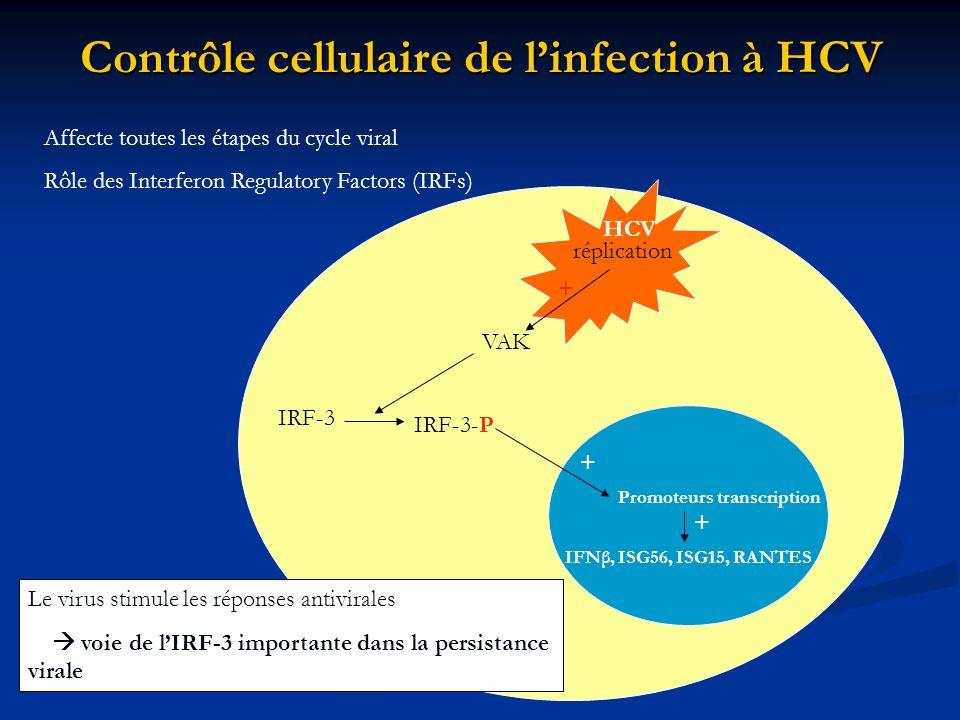 Contrôle cellulaire de l'infection à HCV