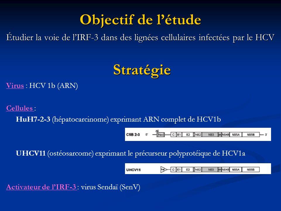 Objectif de l'étude Stratégie
