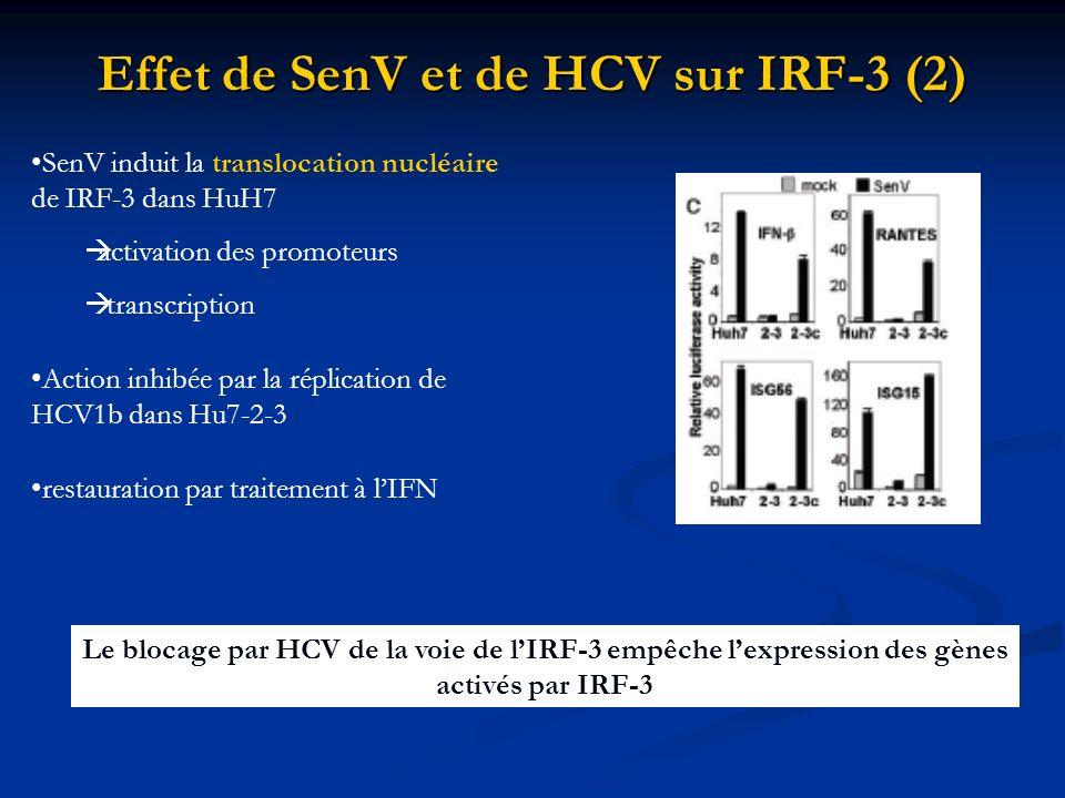 Effet de SenV et de HCV sur IRF-3 (2)