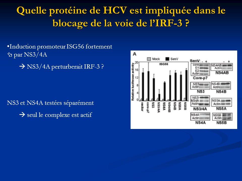 Quelle protéine de HCV est impliquée dans le blocage de la voie de l'IRF-3