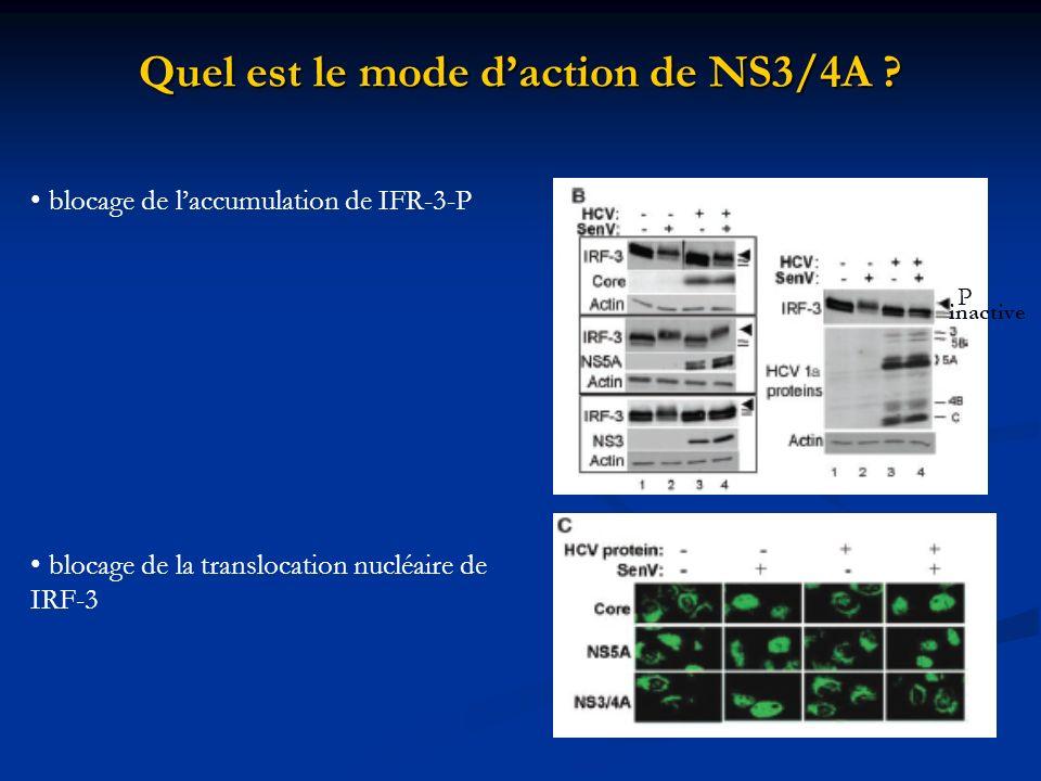 Quel est le mode d'action de NS3/4A