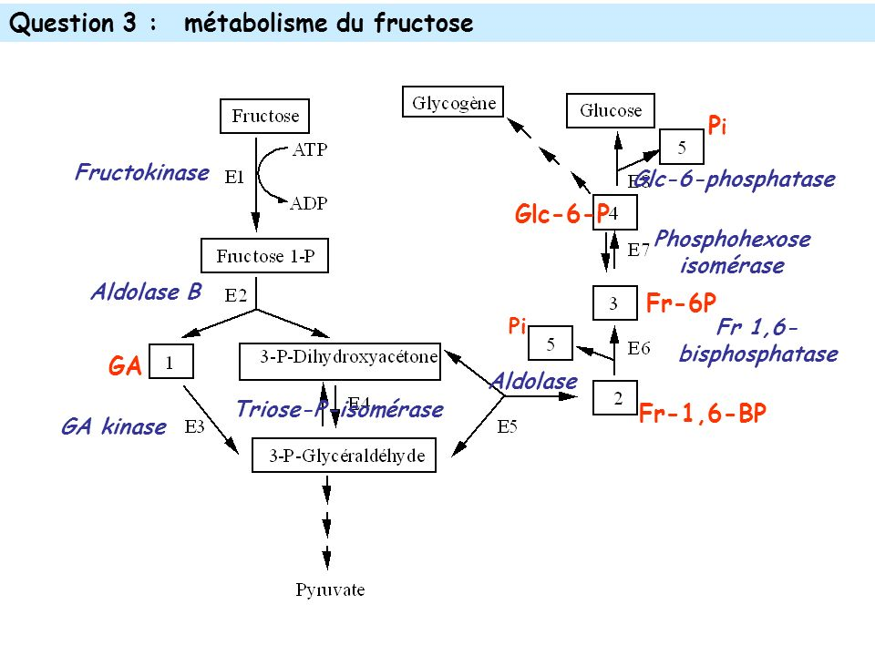 Question 3 : métabolisme du fructose