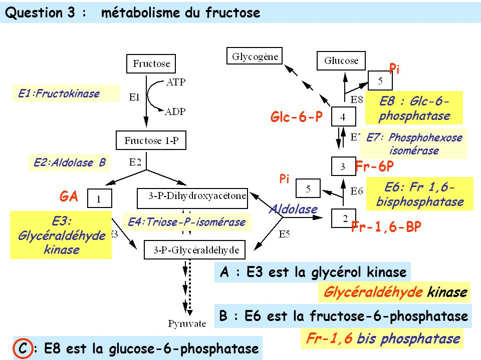 E3: Glycéraldéhyde kinase