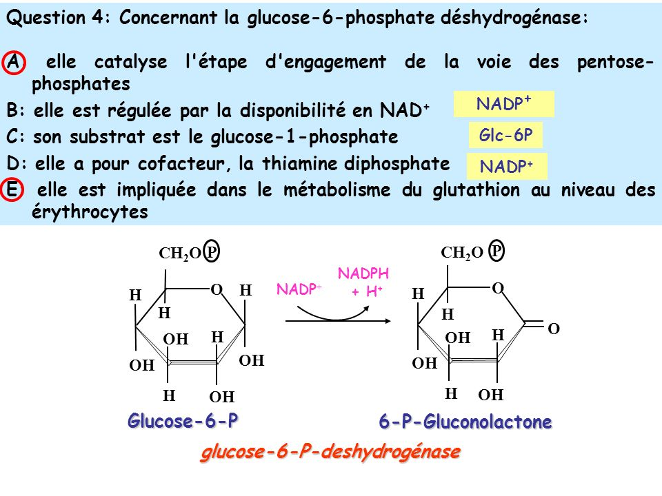glucose-6-P-deshydrogénase