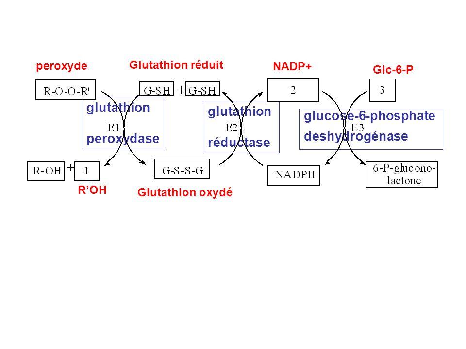 glutathion glutathion glucose-6-phosphate peroxydase deshydrogénase
