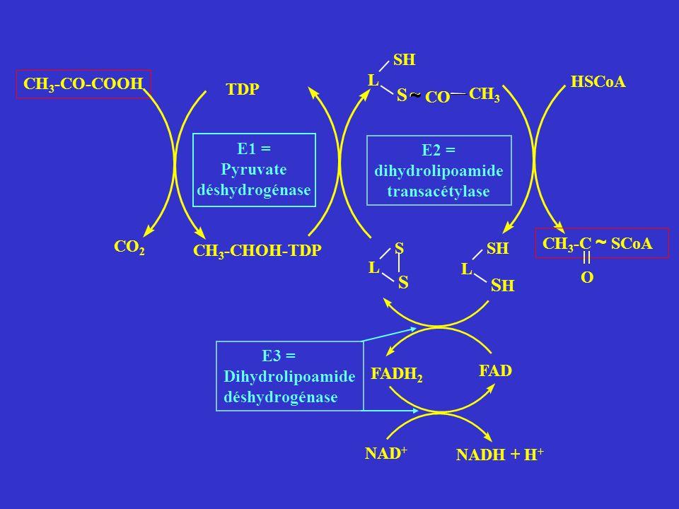 S ~ ~ S SH CO CH3 L SH CH3-CO-COOH HSCoA TDP E1 = Pyruvate