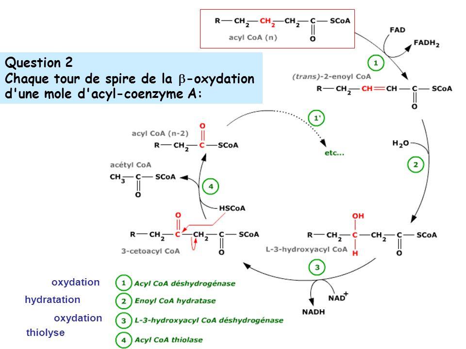Chaque tour de spire de la -oxydation d une mole d acyl-coenzyme A: