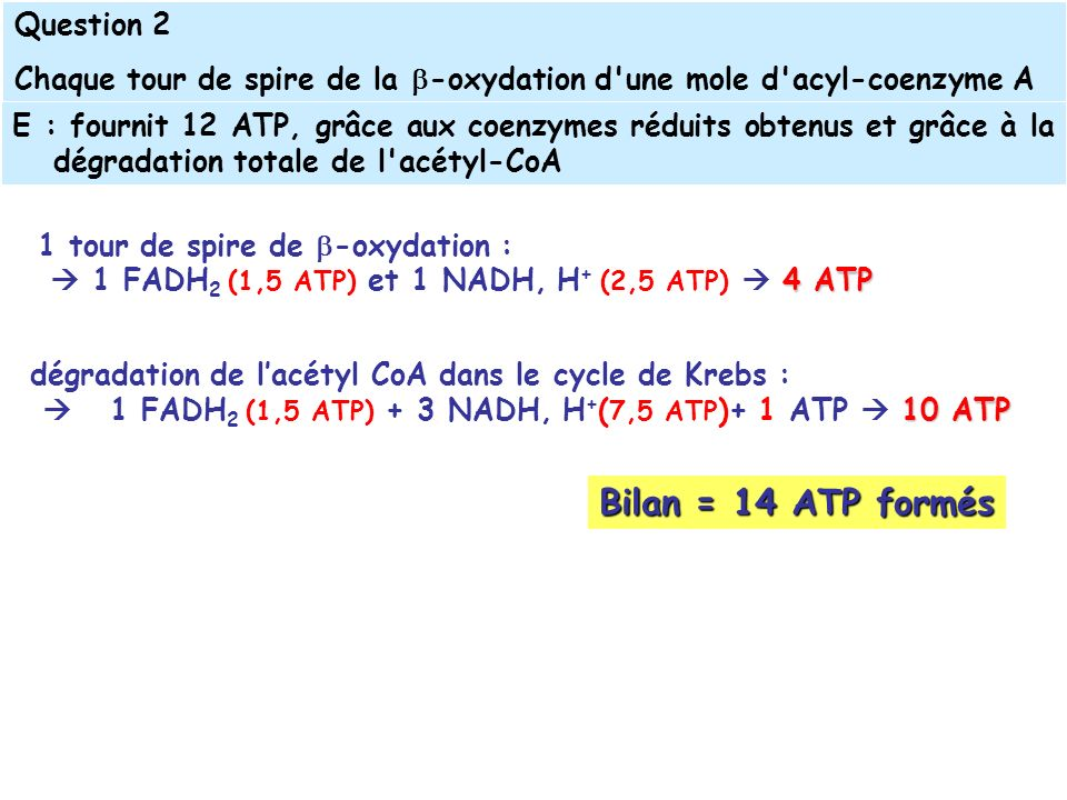 Bilan = 14 ATP formés Question 2