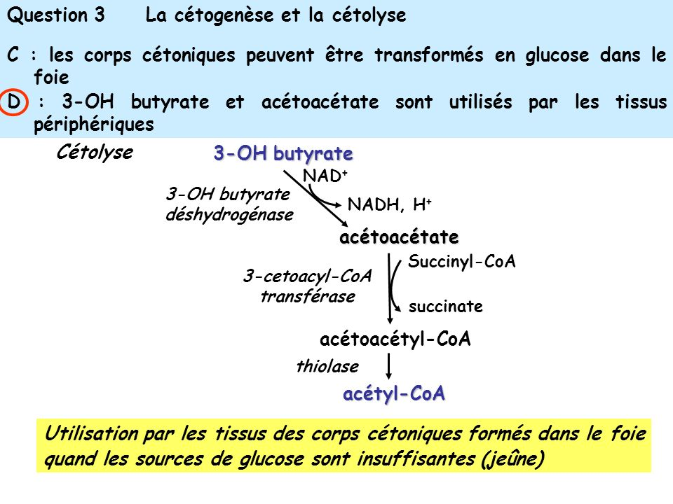 Question 3 La cétogenèse et la cétolyse