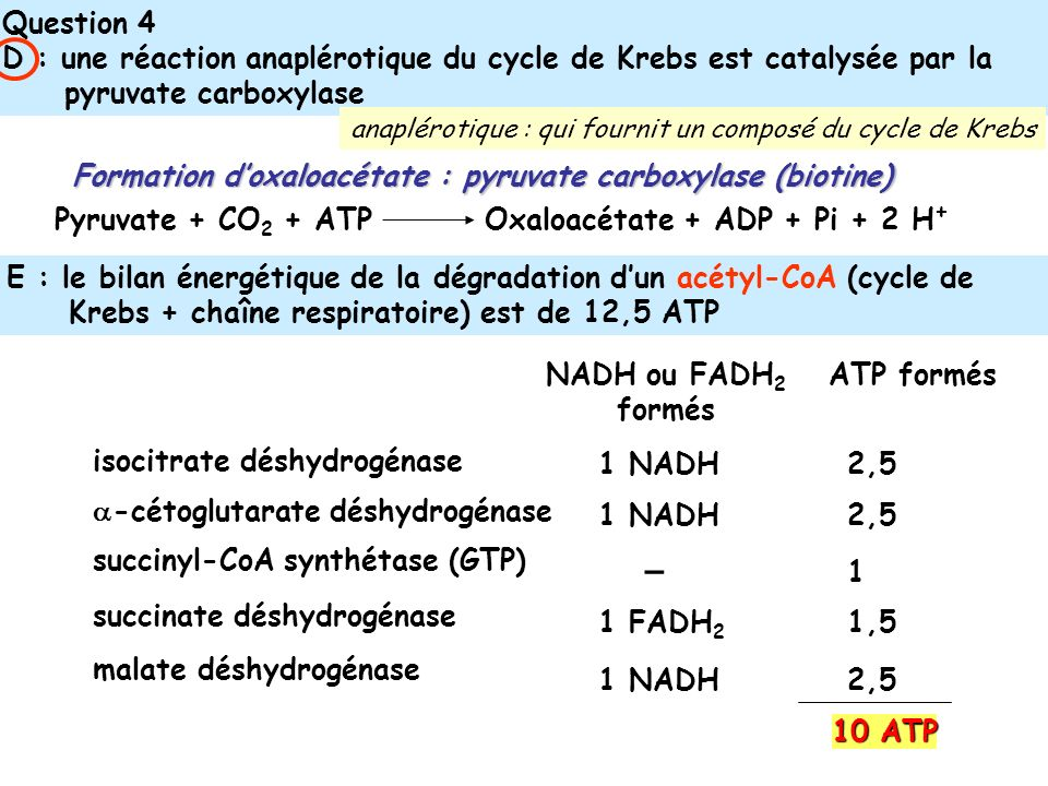 Question 4 D : une réaction anaplérotique du cycle de Krebs est catalysée par la pyruvate carboxylase.