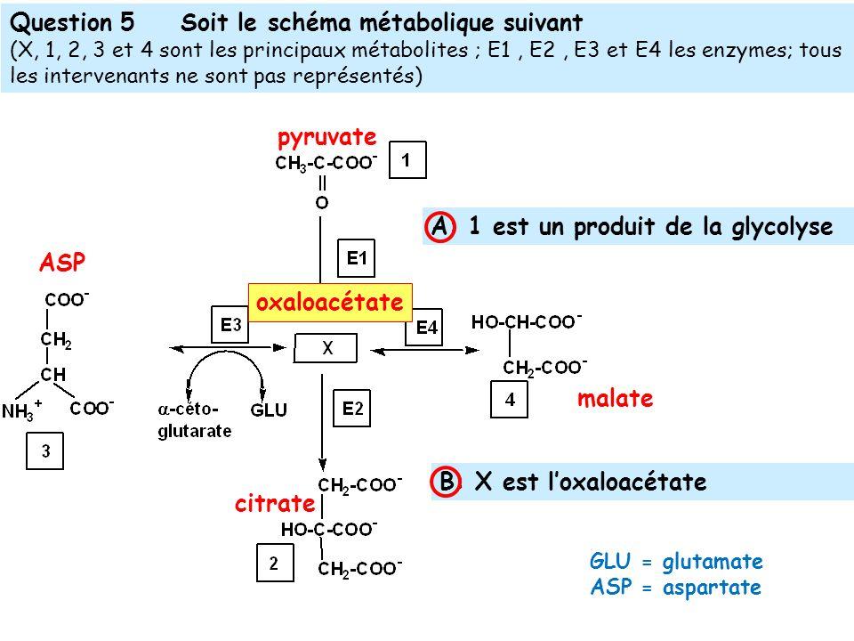 Question 5 Soit le schéma métabolique suivant