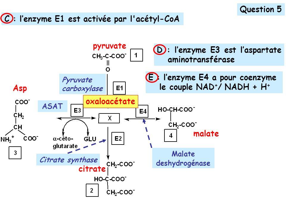 C : l'enzyme E1 est activée par l acétyl-CoA