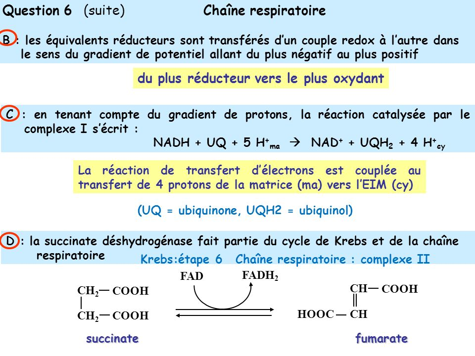 Question 6 (suite) Chaîne respiratoire