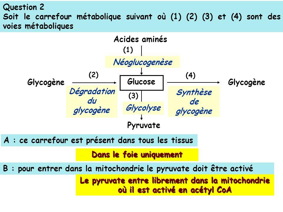 Dégradation du glycogène Dans le foie uniquement