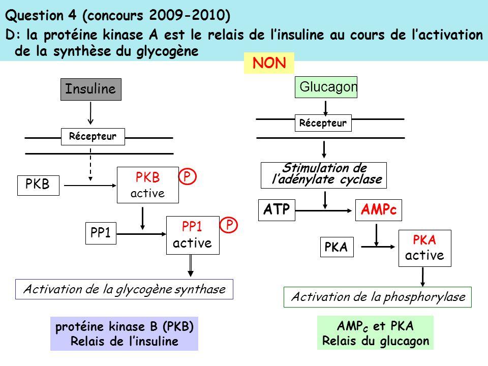 protéine kinase B (PKB)